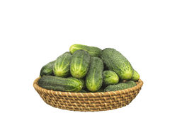 Cucumber much in braided cup Royalty Free Stock Photography