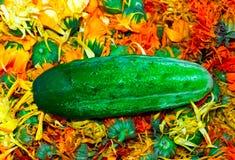 Cucumber. Royalty Free Stock Photo