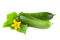 Cucumber over white Royalty Free Stock Photos