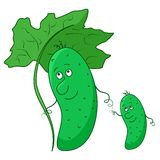 Cucumber, parent and baby Stock Photography