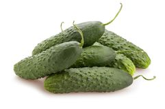 Cucumber stock image