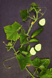 Cucumber plant and fruit from above. Cucumber plant and fruit on black surface, sliced and whole cucumbers, top shot. Fresh ripe healthy vegetable eating Royalty Free Stock Images