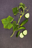 Cucumber plant and fruit. Homemade cucumber plant and fruits from above on black surface. Healthy vegetable eating Royalty Free Stock Photography