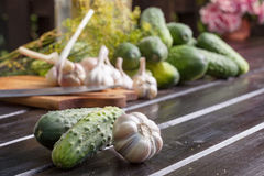 Cucumber. Preparation of inventories for the winter Royalty Free Stock Photos