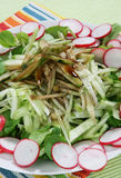 Cucumber salad. Delicious cucumber salad with red radish and green lettuce stock photos