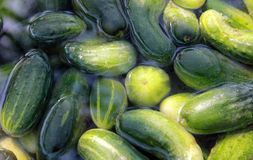 Cucumber season. Washing of cucumbers in water before the use Stock Image