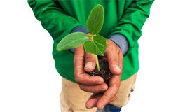 Cucumber seedling on hand farmer and isolate white Stock Photography