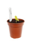 Cucumber seedling in a pot Stock Photos
