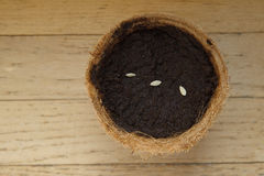 Cucumber Seeds in Organic Planter Stock Photography