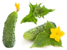 Cucumber set Royalty Free Stock Photos