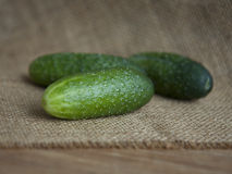 Cucumber Stock Photos