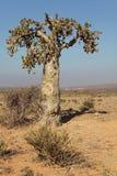 Cucumber tree Stock Image