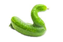 Cucumber with unusual shapes on a light background Stock Images