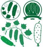 Cucumber. Vector illustration (EPS 10 Stock Image