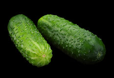 Cucumber vegetable on black. Cucumber vegetable isolated on black background Stock Image