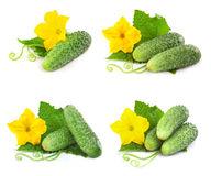 Cucumber vegetables isolated Stock Photo