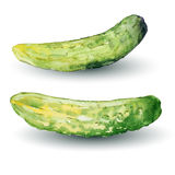 Cucumber watercolor, vector Royalty Free Stock Photo