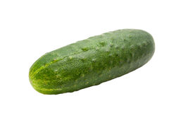 Cucumber on white background. Single cucumber isolated on a white background royalty free stock photo
