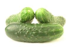 Cucumber on white background. Cucumber isolated on white background Royalty Free Stock Photos