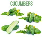 Cucumber on white Stock Photo