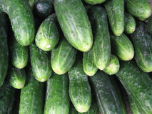 Cucumbers. Pile of cucumbers Royalty Free Stock Photography