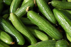 Cucumbers. Collection of cucumbers on the market Royalty Free Stock Image