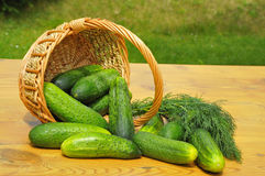 Cucumbers Royalty Free Stock Photos