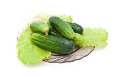 Cucumbers Stock Photography