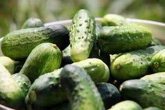 Free Cucumbers Royalty Free Stock Image - 15368606