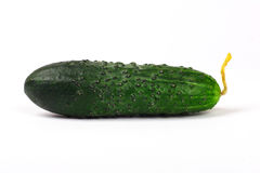 Free Cucumbers Royalty Free Stock Photos - 1561548