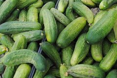 Cucumbers Stock Photo