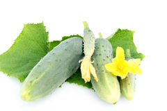 Cucumbers. Leaves and flowers on a white background Stock Photos