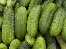 Cucumbers Stock Image
