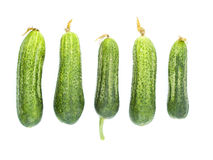 Cucumbers. Green cucumbers isolated on white background Royalty Free Stock Photo