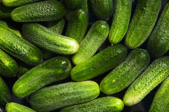 Cucumbers. Wet fresh green cucumbers background Royalty Free Stock Photography