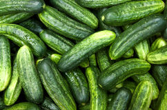 The cucumbers Stock Images