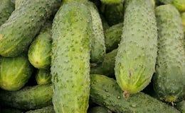 Cucumbers background Stock Photos