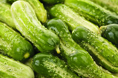 Cucumbers background. Fresh green cucumbers in a pile closeup, vegetable background Royalty Free Stock Photography