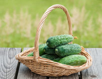 Cucumbers in a basket on  background of nature Royalty Free Stock Image