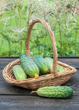 Cucumbers in a basket on  background of nature Stock Photo