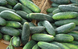 Cucumbers in Baskets. Piles of cucumbers in wicker baskets at an outdoor market Royalty Free Stock Images