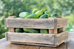 Cucumbers in a box Royalty Free Stock Photos