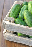 Cucumbers in a box Stock Image