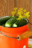 Cucumbers in brine drenched cans Stock Images