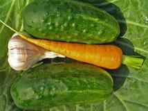 Cucumbers, carrot and garlic. Stock Photos