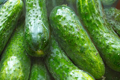 Cucumbers for conservation Stock Photography