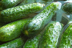 Cucumbers for conservation Royalty Free Stock Photos