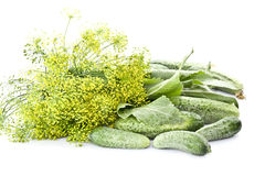 Cucumbers, dill and Horseradish Royalty Free Stock Images