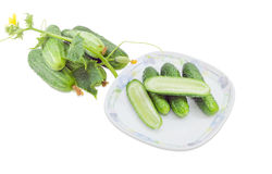 Cucumbers on dish and beside with stalk, leaves and flowers. One bisected and several whole cucumbers on a dish, beside separately cucumbers with with stalk Stock Photo