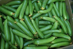Cucumbers at Dubai market Royalty Free Stock Images